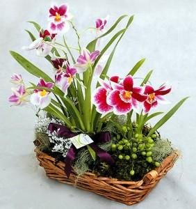 Mohanogor Gift Flowers